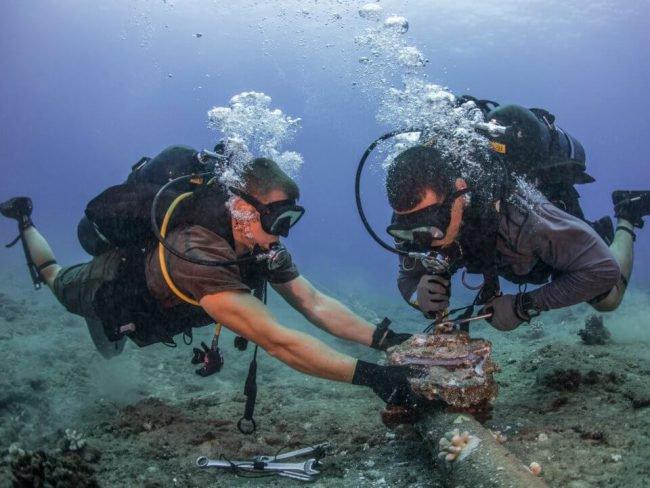 Как прокладывают и обслуживают подводные кабели